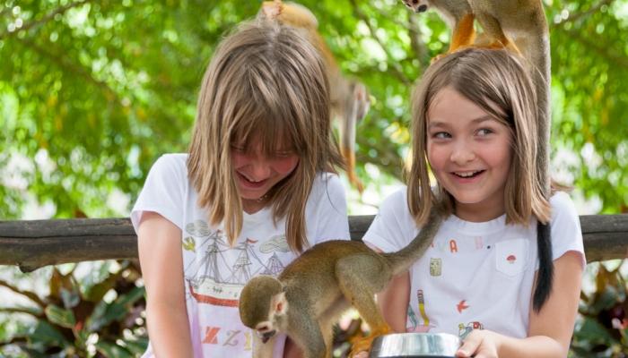 Feeding the monkeys at Monkeyland