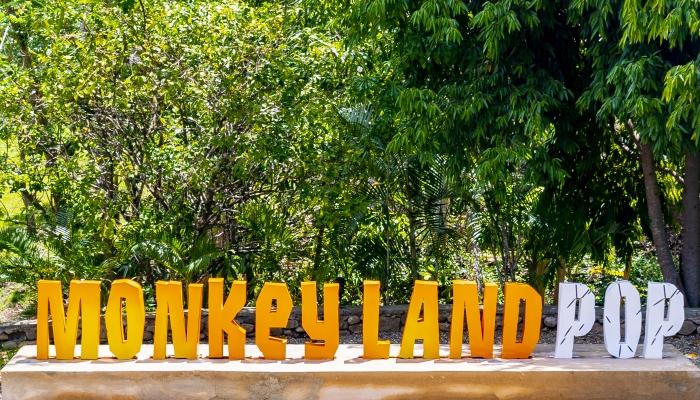 Monkeyland POP